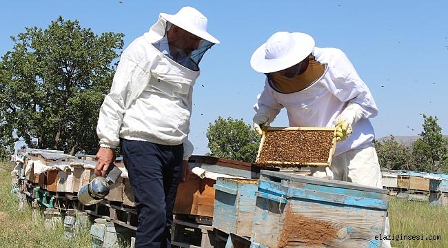 Arıcılar son 10 yılın en kötü sezonunu yaşıyor